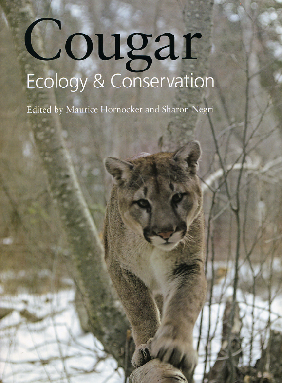 Conservationists spotlight the cougar
