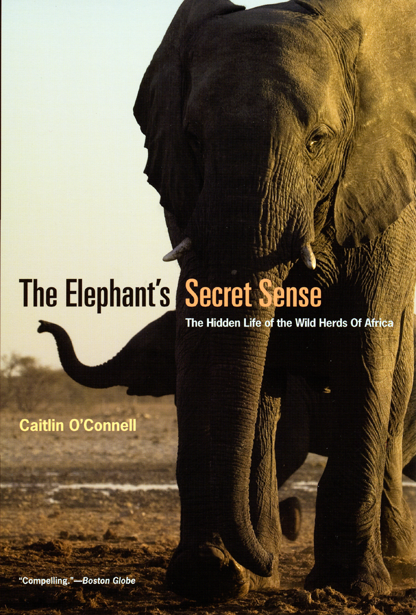 Press Release: O'Connell, The Elephant's Secret Sense
