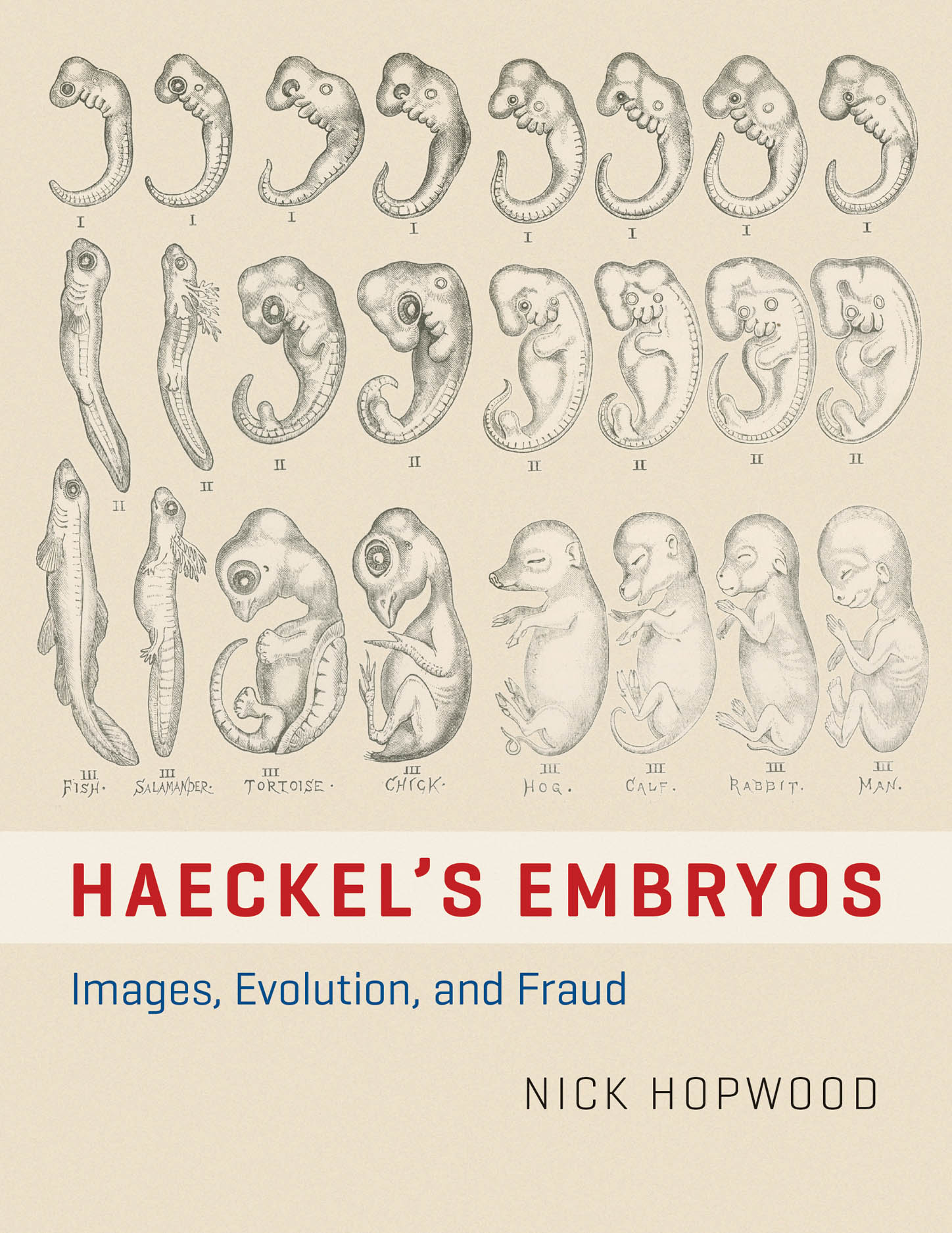 Haeckel's Embryos: Images, Evolution, and Fraud