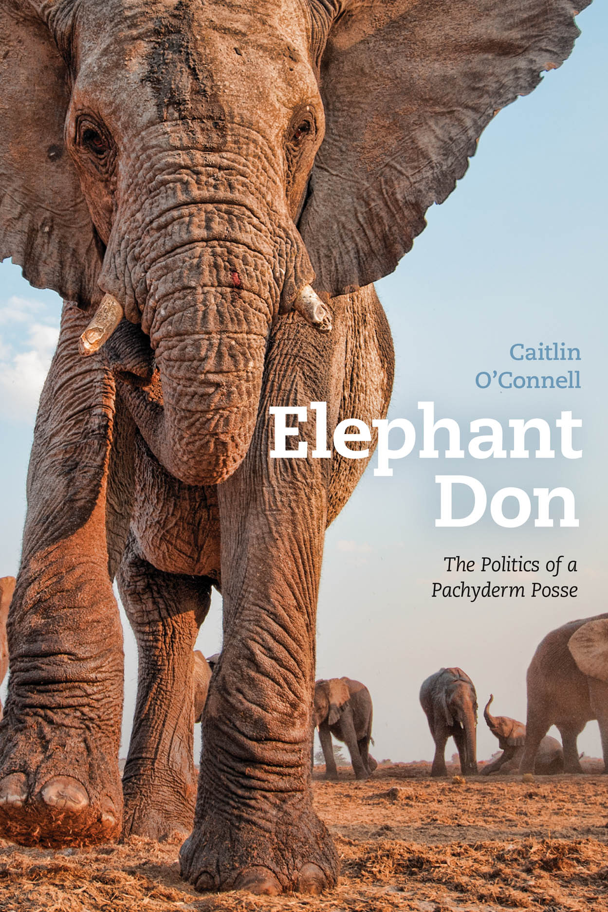 Elephant Don: The Politics of a Pachyderm Posse
