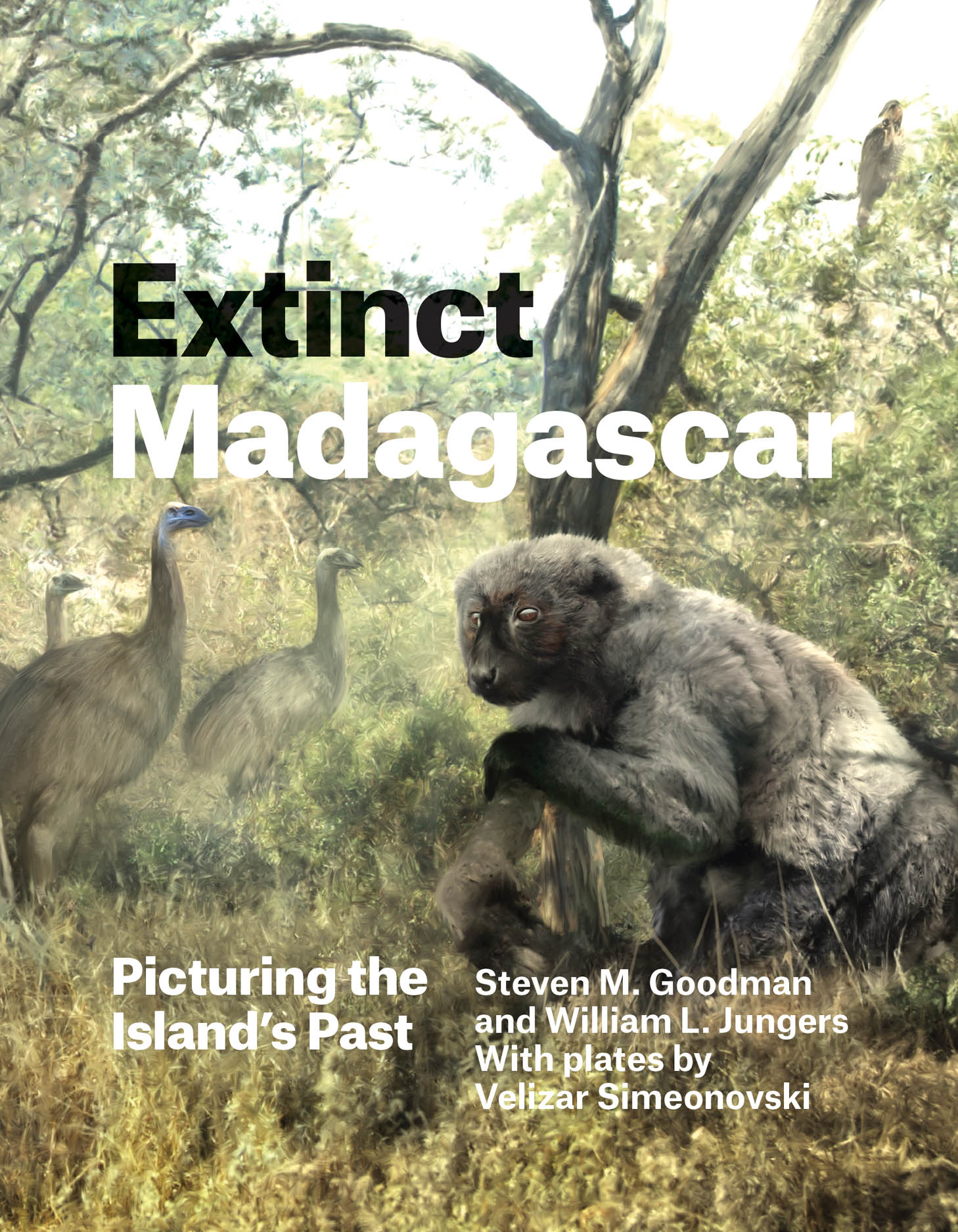 Extinct Madagascar: Picturing the Island's Past