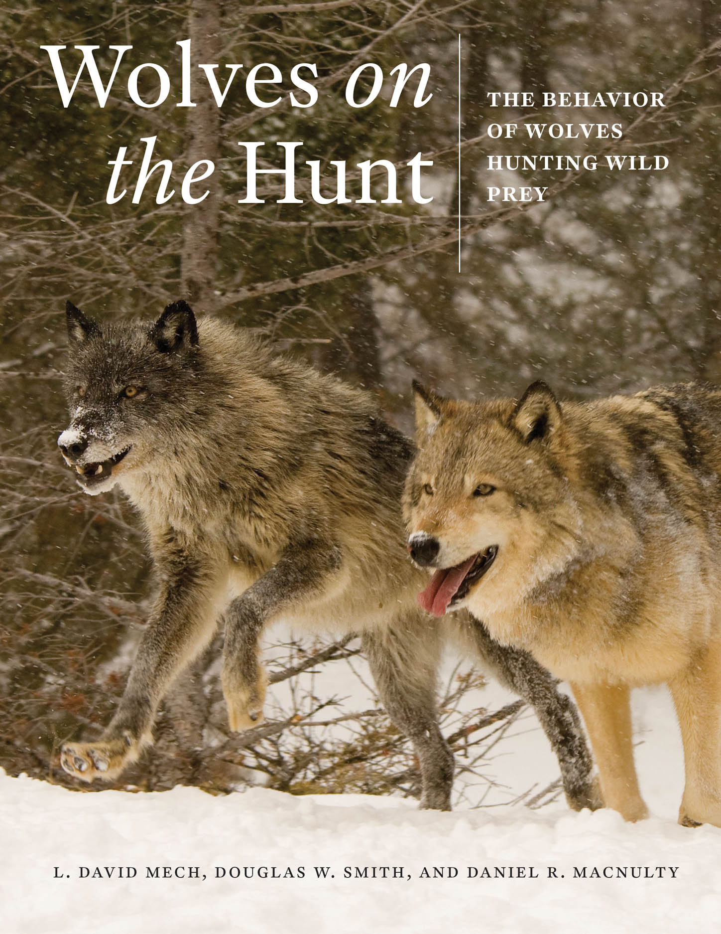 Wolves on the Hunt