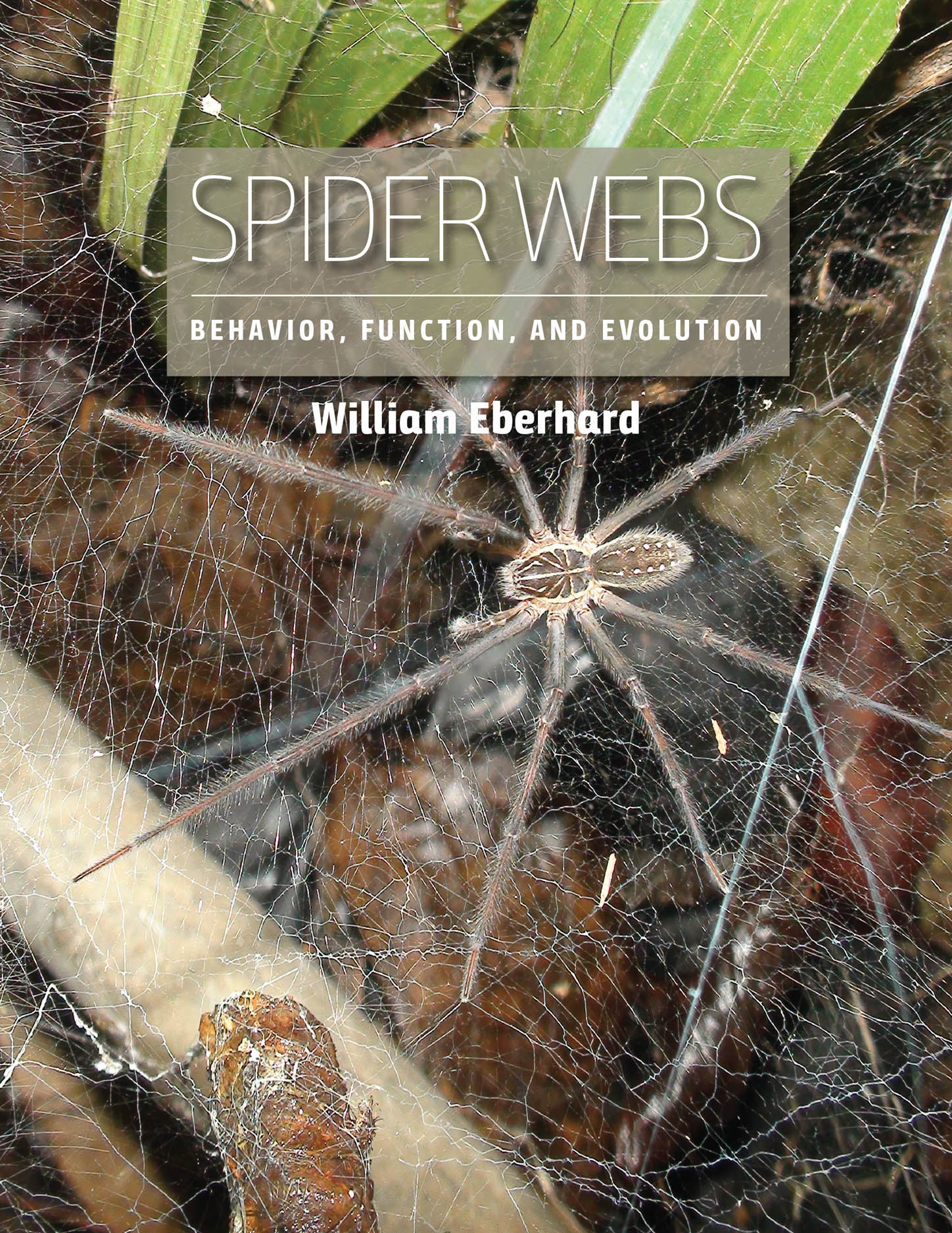 Spider Webs: Behavior, Function, and Evolution