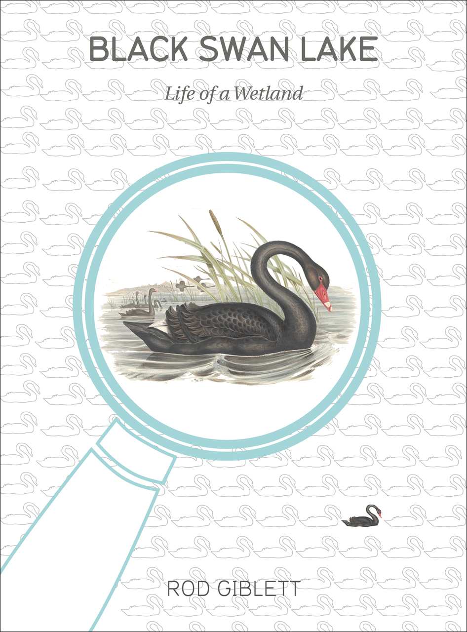 Black Swan Lake: Life of a Wetland