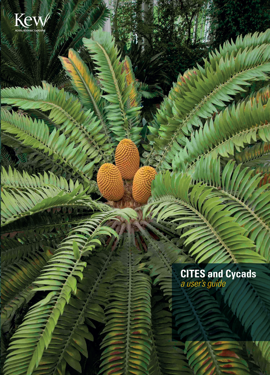 CITES and Cycads
