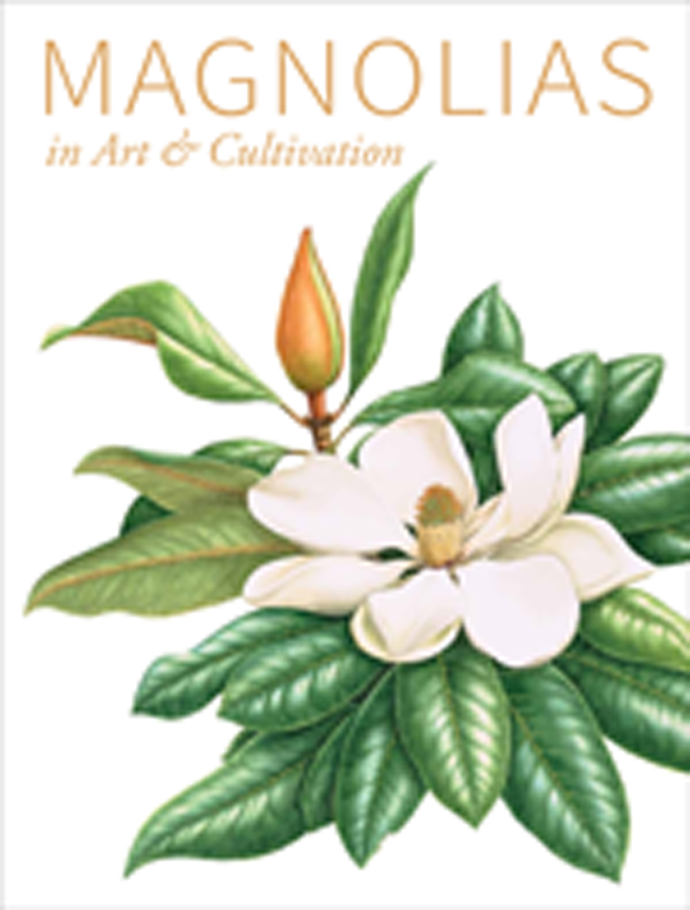 Magnolias in Art and Cultivation