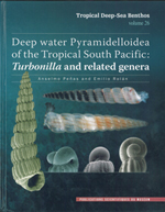 Deep water Pyramidelloidea of the Tropical South Pacific: Turbonilla and related genera